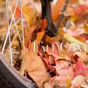 Fall Contest 2016